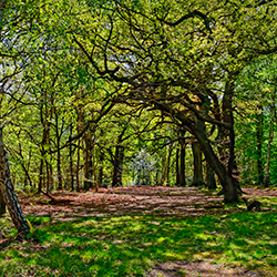 Sherwood Forest [square]